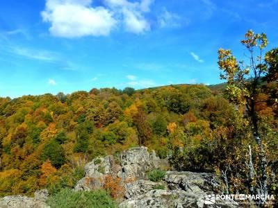 La Dehesa Bonita - Abedular de Somosierra_ senderismo y montaña